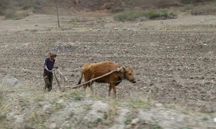Com o fechamento das fronteiras, nenhum alimento chega até os norte-coreanos durante a quarentena